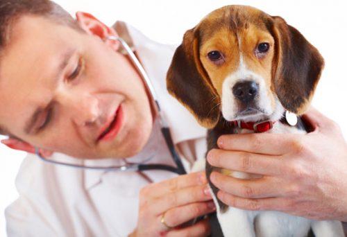 dog-veterinarian-checkup-shutterstock_24179080